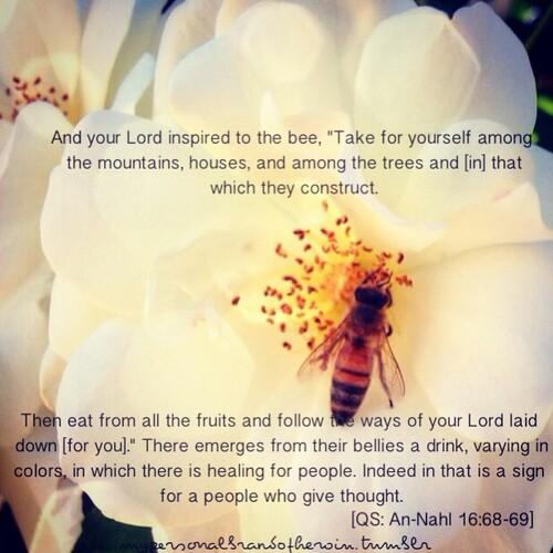 Flu Lemon Honey Water Ayat Quran