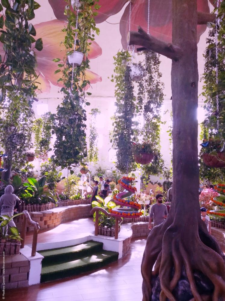 Dubai-Butterfly-Garden-2.jpg