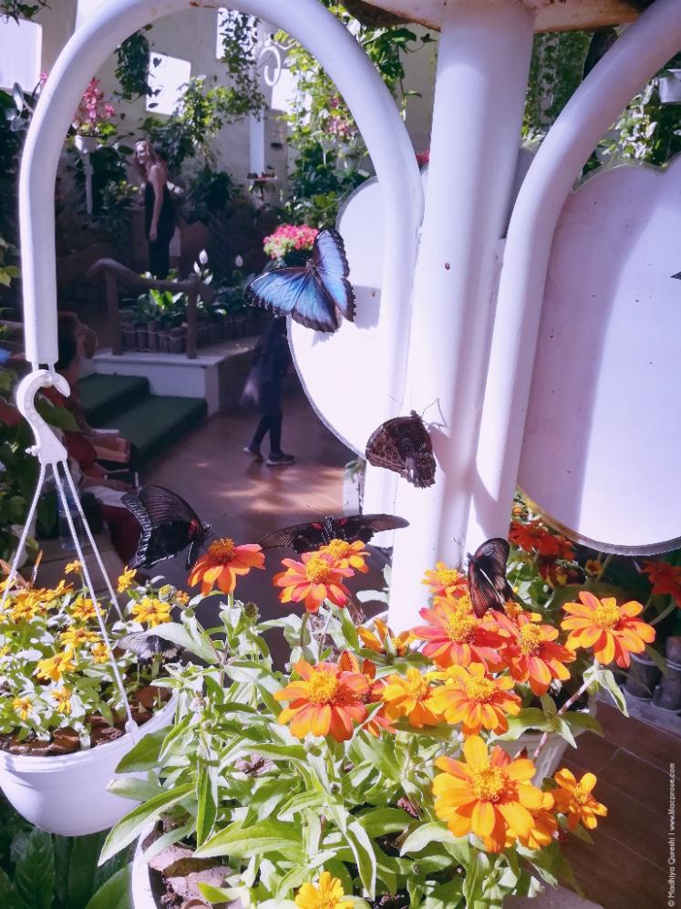 Dubai-Butterfly-Garden-6