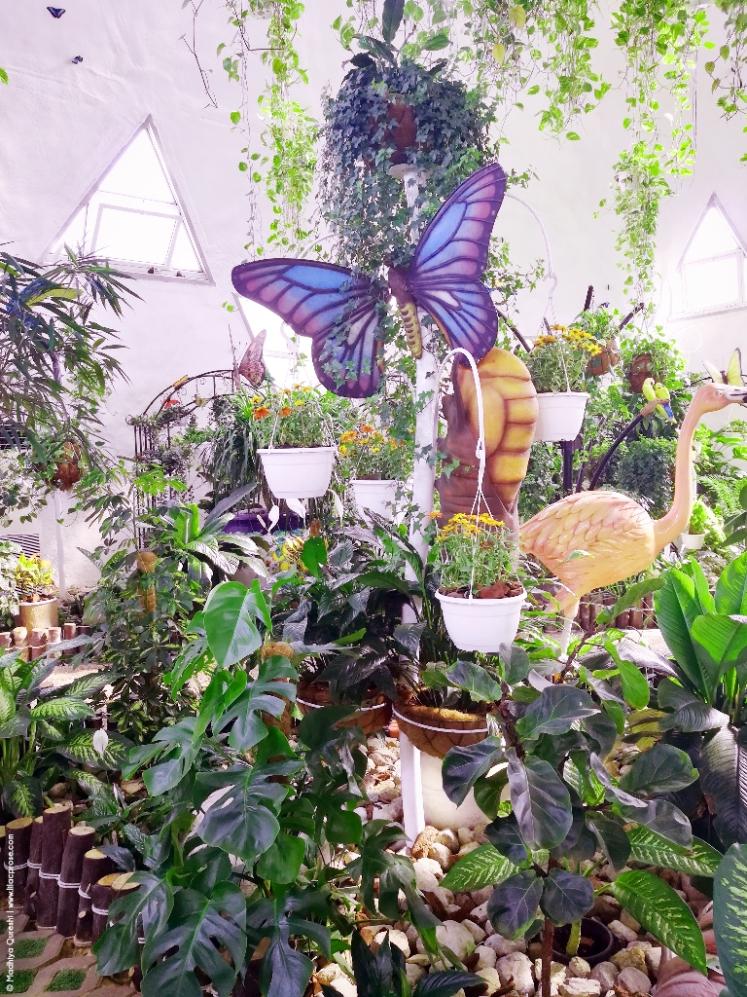 Dubai-Butterfly-Garden-7