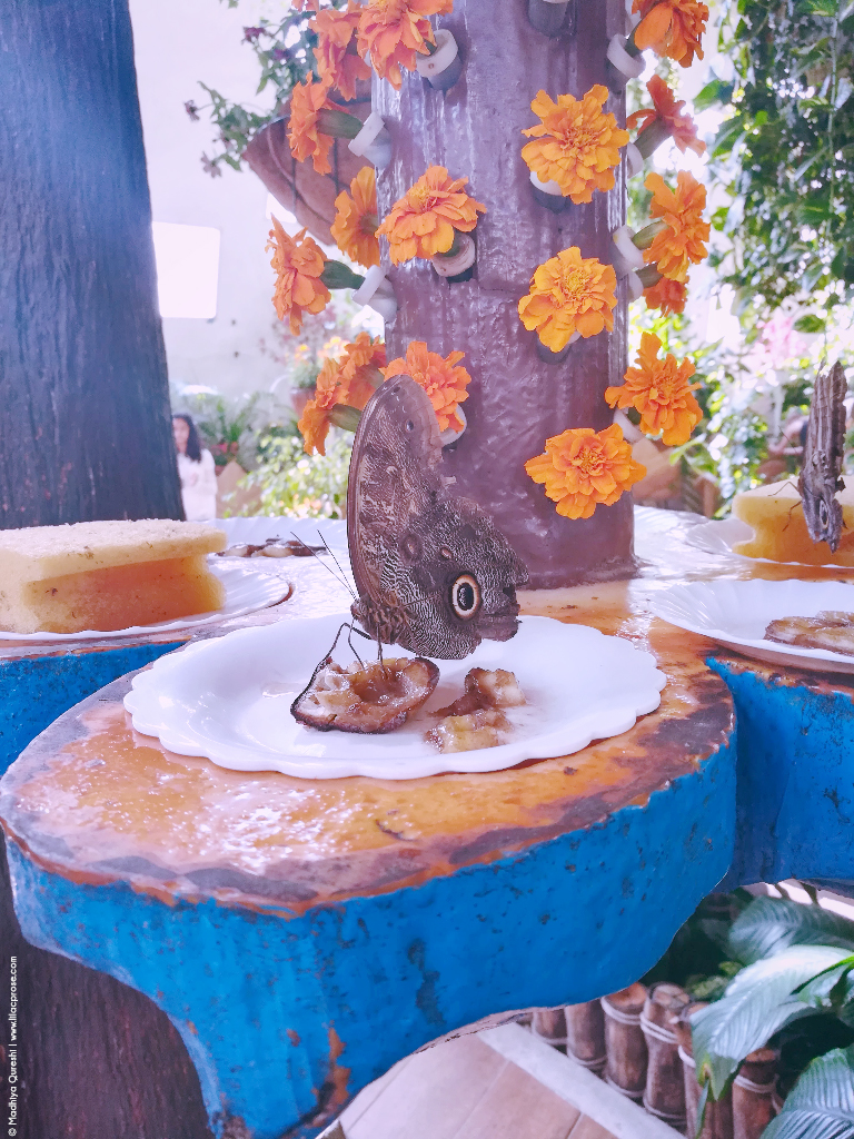 Dubai Butterfly Garden 8