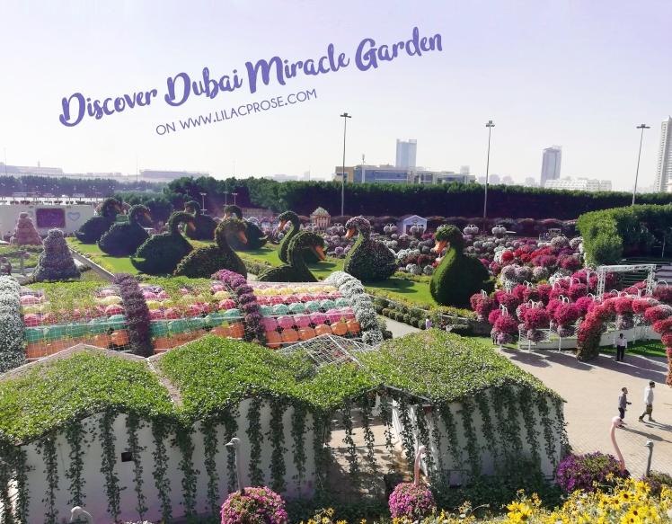 Dubai-Miracle-Garden-0