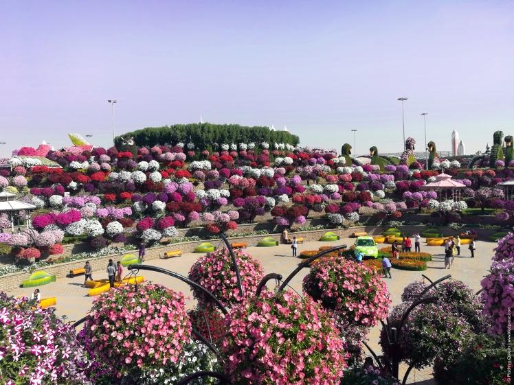 Dubai-Miracle-Garden-4.jpg