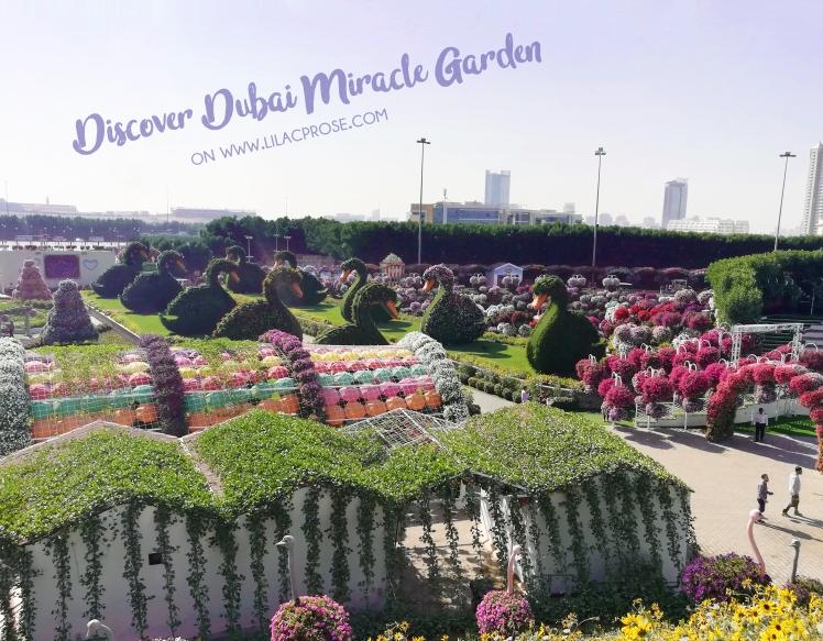 Dubai Global Village Lilac Prose 4