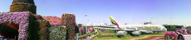 Dubai Global Village Lilac Prose 5